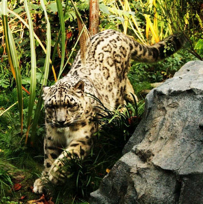 Top 10 Central Park-Zoo-Photo by Tiffany Mayr
