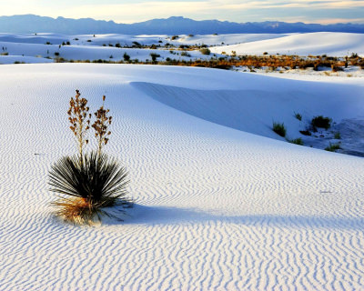 White Sands – the Largest Gypsum Desert in the World, USA