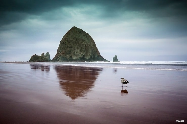 Haystack Rock-Photo by Oded Ben-Raphael
