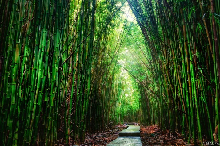 The Pipiwai Trail – the Most Scenic Hiking Route in Hawaii