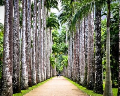 Visit Ancient Rio de Janeiro Botanical Garden in Brazil