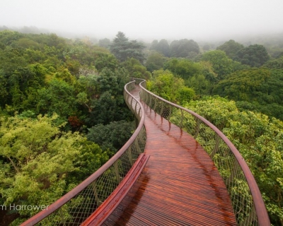 The Boomslang – a Walkway Above the Trees in South Africa