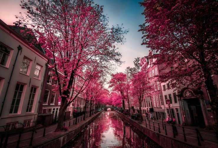 Top 10 Blossoming-Amsterdam-Photo by Invivo Oz