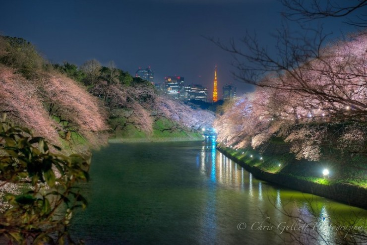 Top 10 Blossoming-Chidorigafuchi-Photo by Chris Gullett