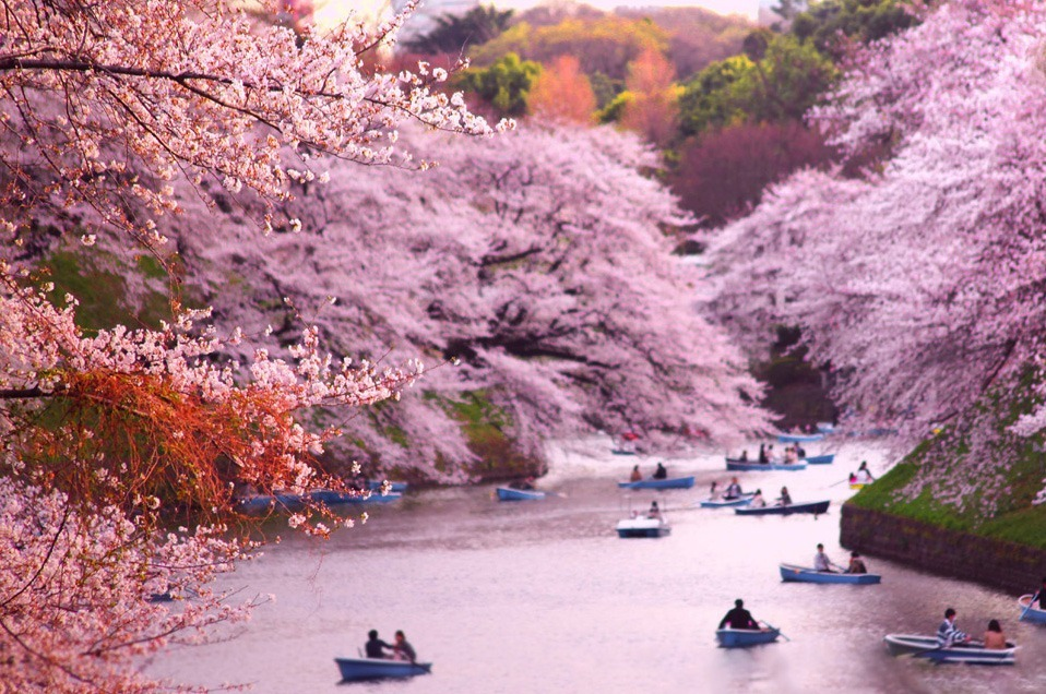 Top 10 Blooming Cities in Spring