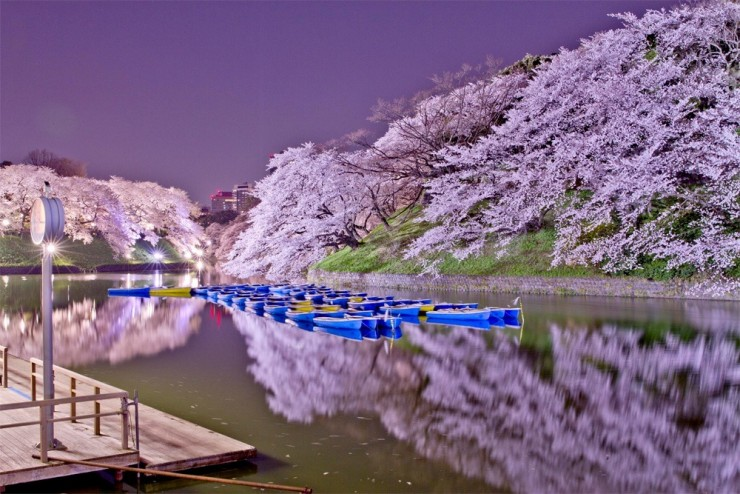 Top 10 Blossoming-Chidorigafuchi2