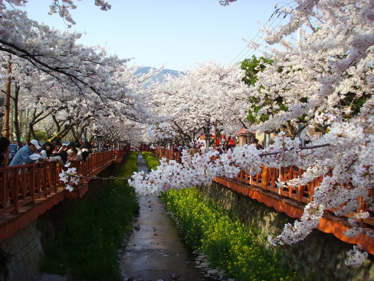 Top 10 Blossoming-Korea