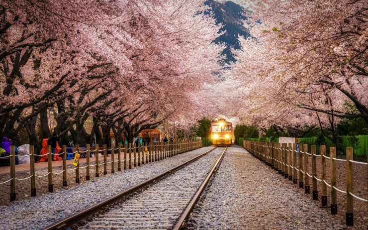 Top 10 Blossoming-Korea-Photo by Aaron Choi