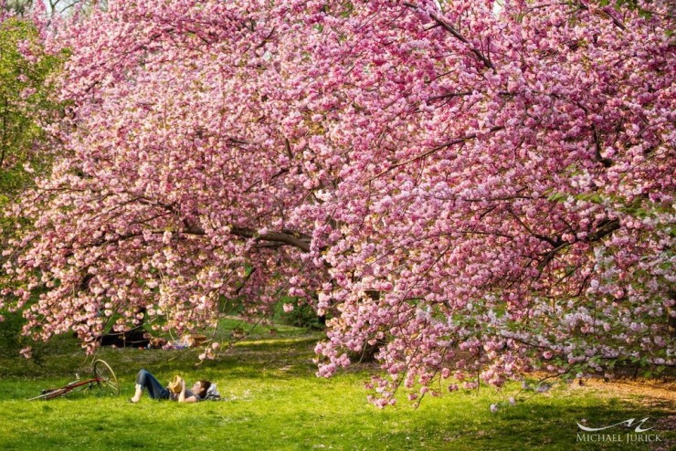 Top 10 Blossoming-NYC-Photo by Michael Jurick
