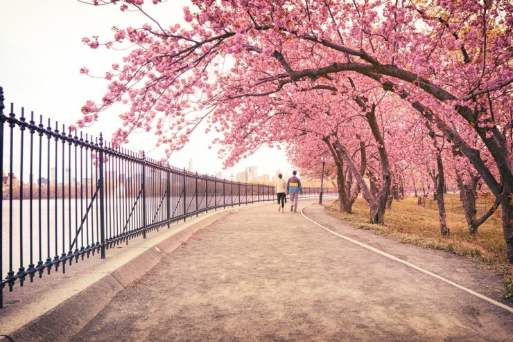 Top 10 Blossoming-NYC-Photo by Vivienne Gucwa