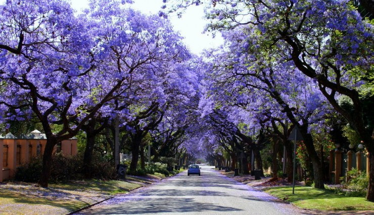 Top 10 Blossoming-Pretoria
