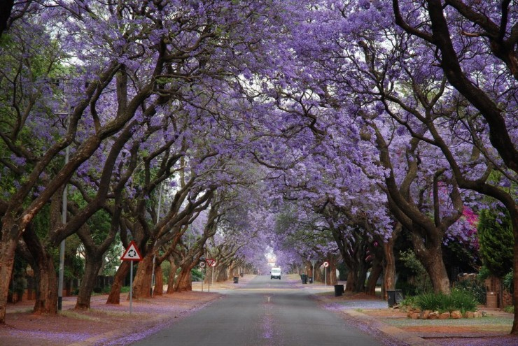 Top 10 Blossoming-Pretoria2