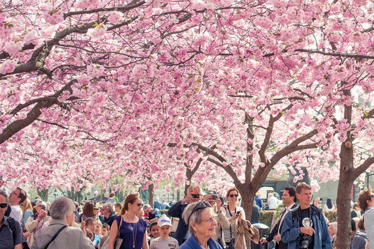 Top 10 Blossoming-Sweden