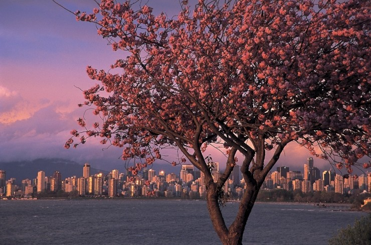 Top 10 Blossoming-Vancouver