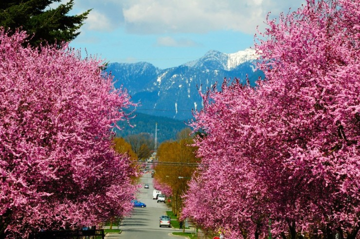 Top 10 Blossoming-Vancouver3