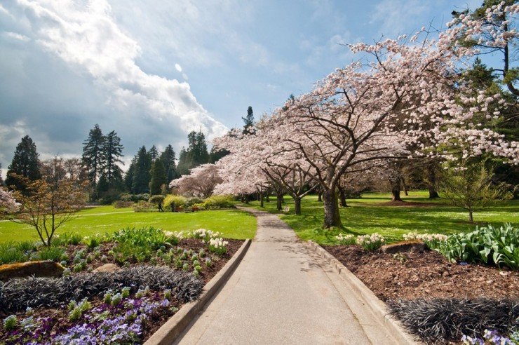 Top 10 Blossoming-Vancouver4