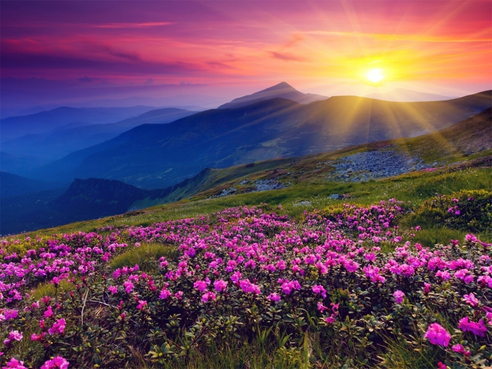 27 Shadows Of Beautiful And Vibrant Spring Places To See In Your Lifetime