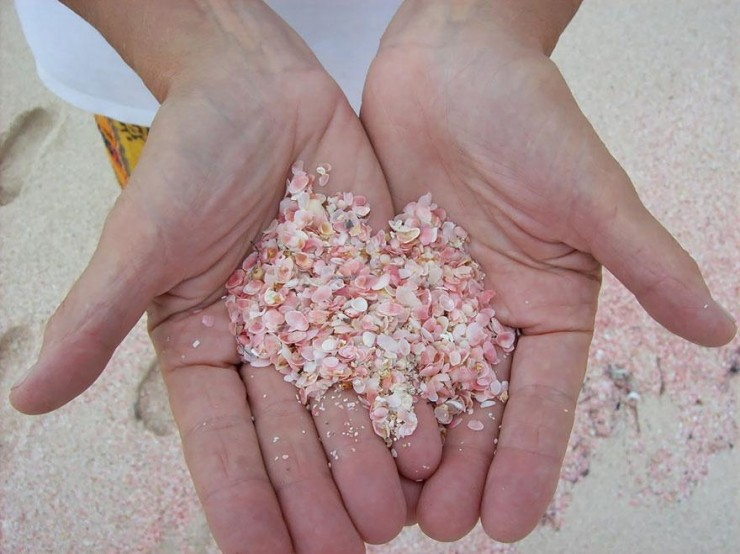 The unique pink sands beach in harbour island the bahamas for Bahamas pink sand beach