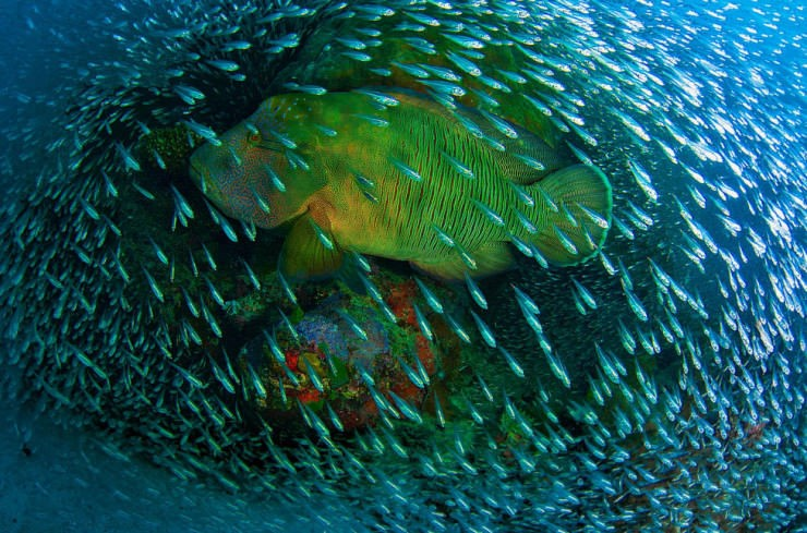 Top 10 Aquatic-Barrier-Photo by Christian Miller