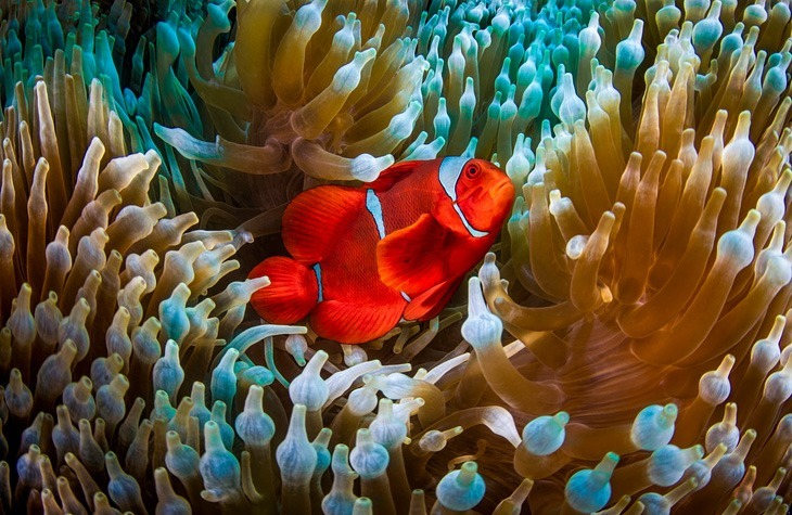 Top 10 Aquatic-Barrier-Photo by Christian Miller2