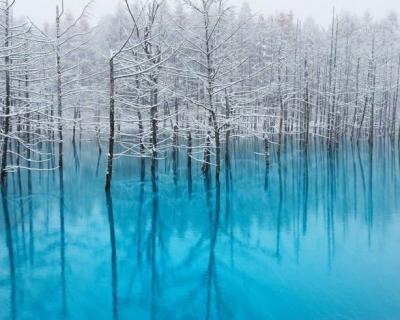 The Supernatural Blue Pond in Biei, Japan
