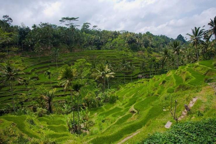 Top Terraced-Bali