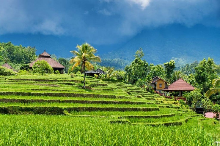 Top Terraced-Bali2