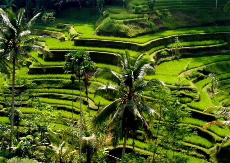 Top Terraced-Bali3
