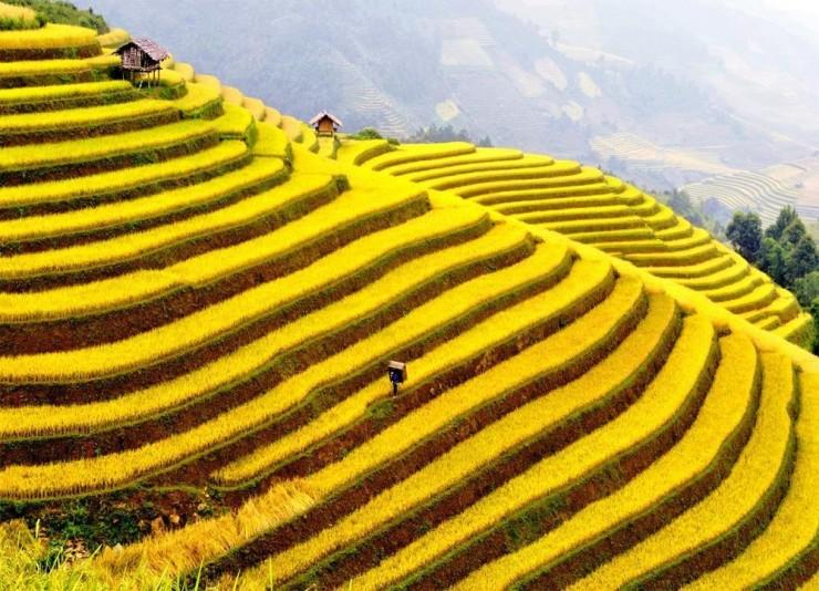 Top Terraced-Vietnam