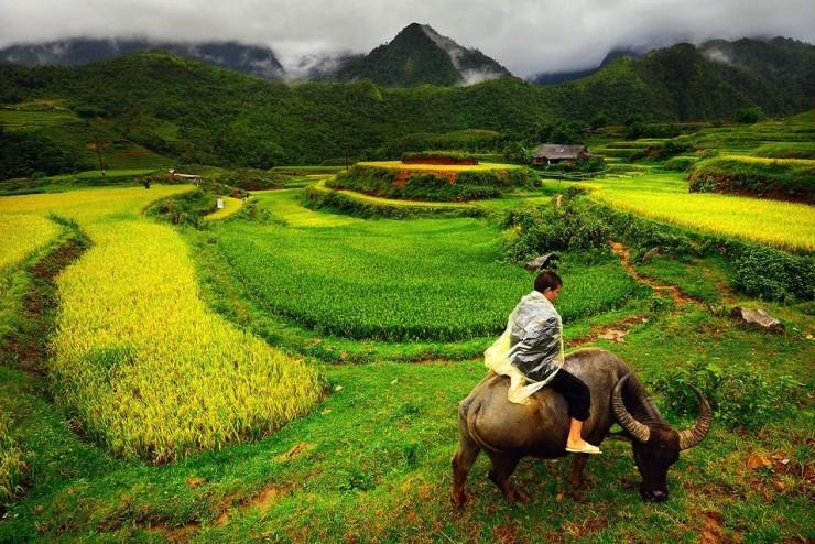 Top Terraced-Vietnam-Photo by Tonnaja Anan Charoenkal3