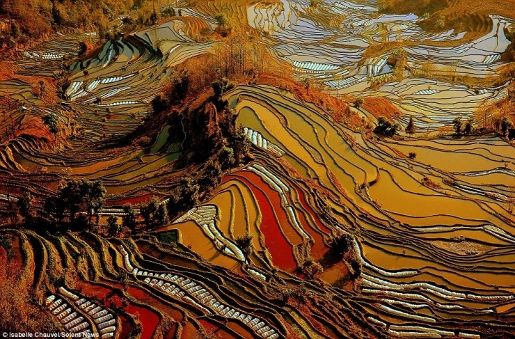 Top Terraced-Yuanyang-Photo by Isabelle Chauvel