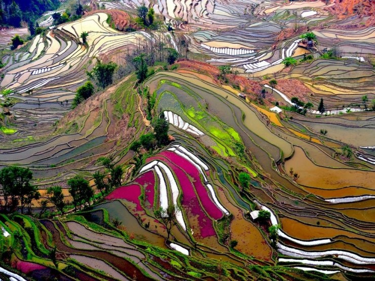 Top Terraced-Yuanyang-Photo by Thierry Bornier