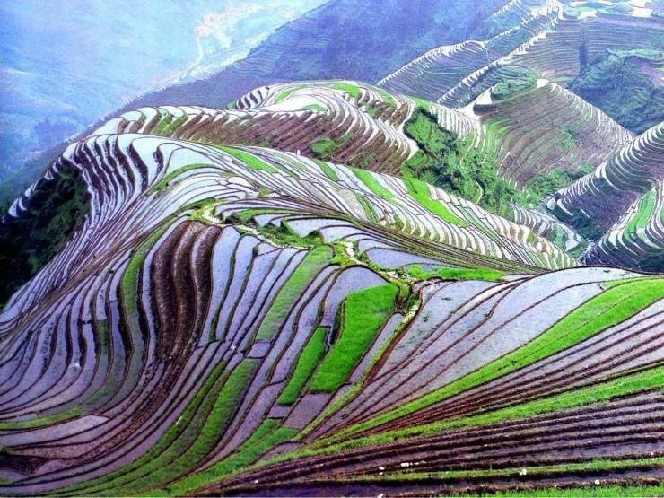 Top Terraced-Yuanyang2