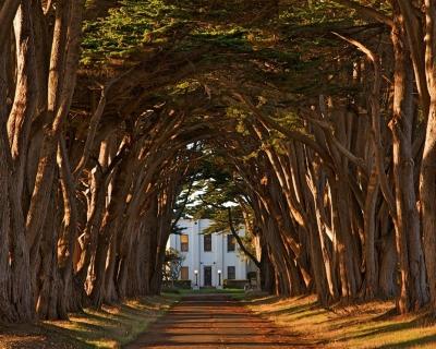 Romantic Cypress Tree Avenue in California, USA
