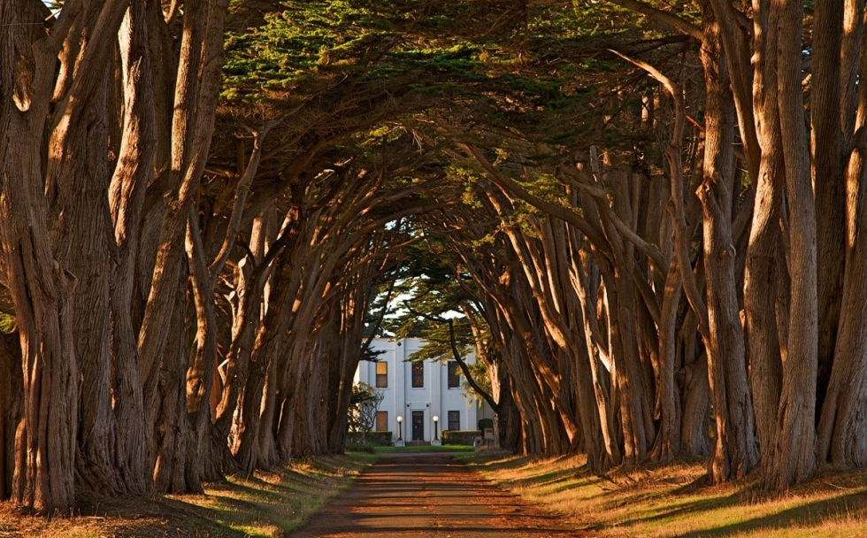 Romantic Cypress Tree Avenue in California, USA