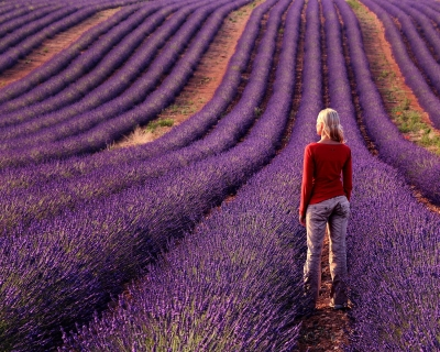 Top 10 Colorful and Fragrant Flowery Fields
