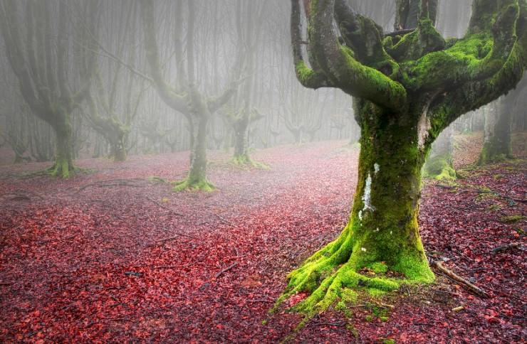 Top 10 Autumn-Gorbea-Photo by David Pintado