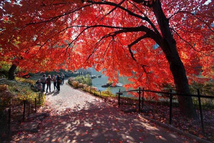 Top 10 Autumn-NYC-Photo by Chris Schoenbohm