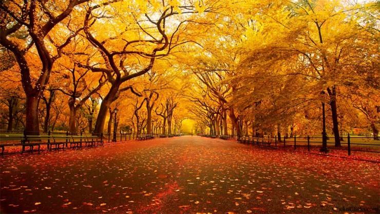 Top 10 Autumn-NYC4