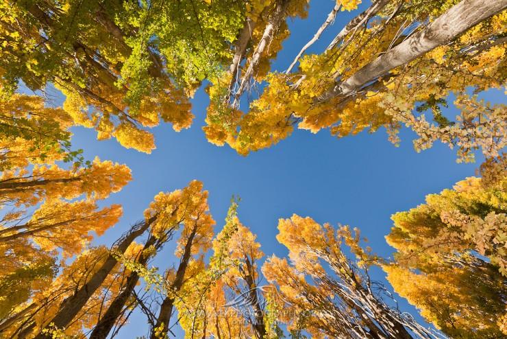 Top 10 Autumn-Otago-Photo by Kea Photography
