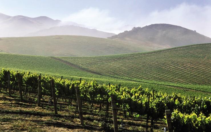 Top 10 Wine-California