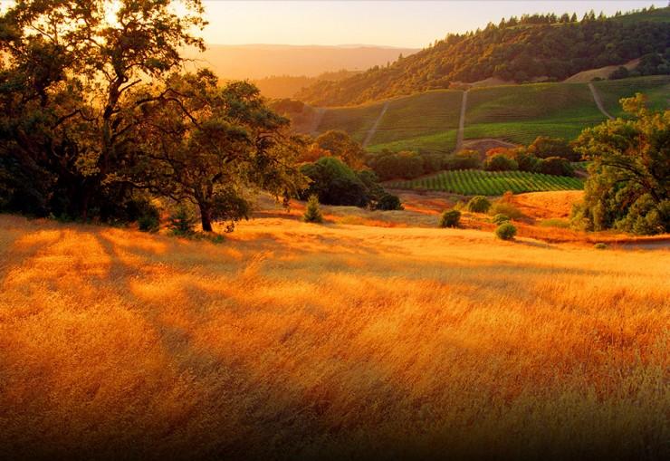 Top 10 Wine-California3