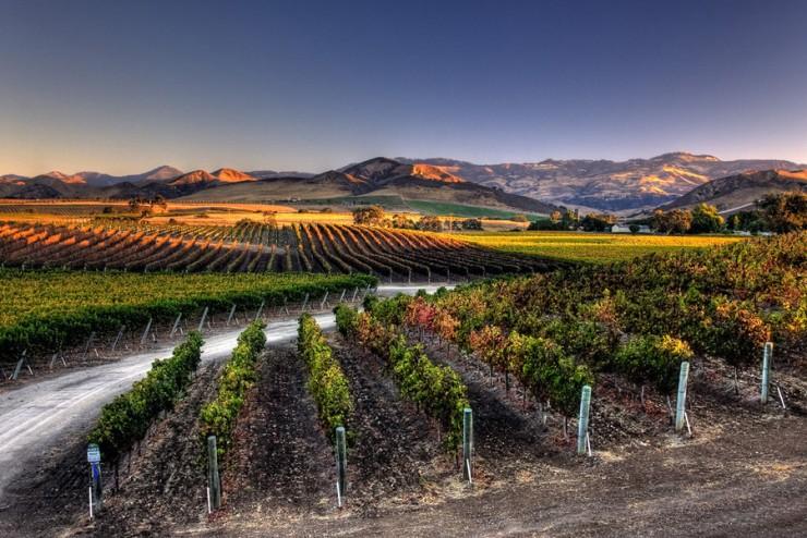 Top 10 Wine-California4
