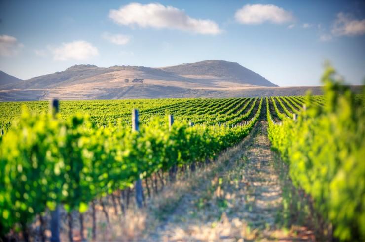 Top 10 Wine-Cape Town2