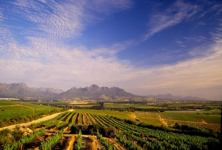 Top 10 Wine-Cape Town3