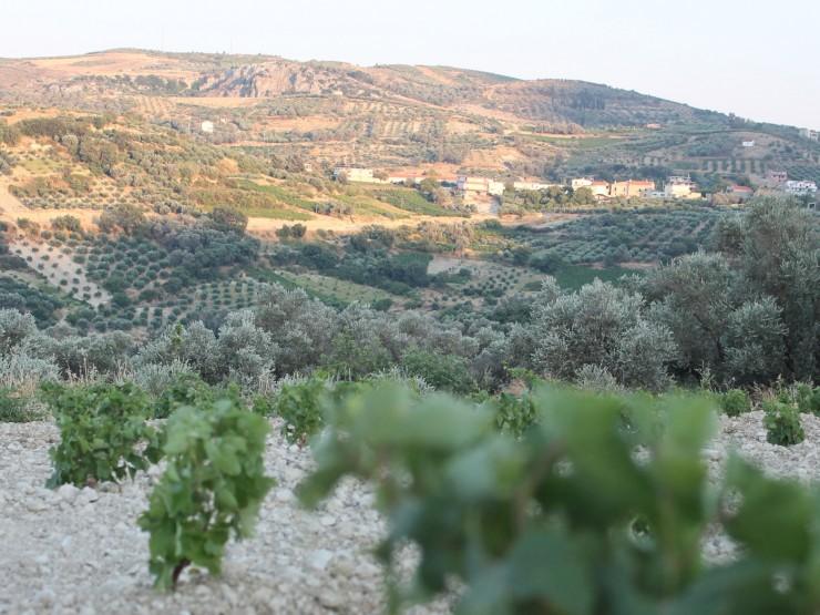 Top 10 Wine-Crete