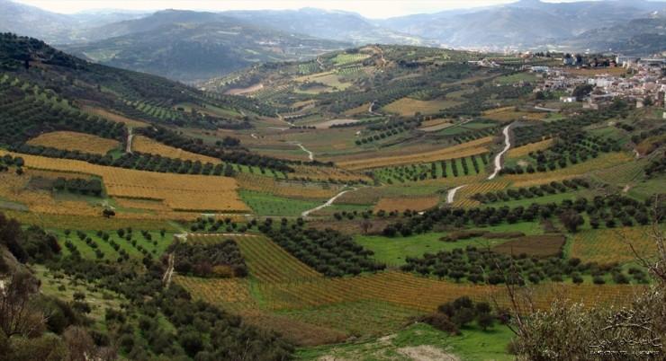 Top 10 Wine-Crete2