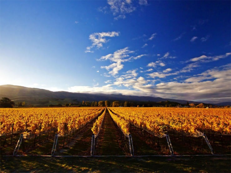 Top 10 Wine-Cromwell