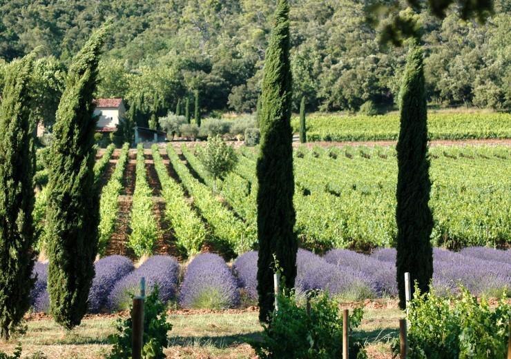 Top 10 Wine-France
