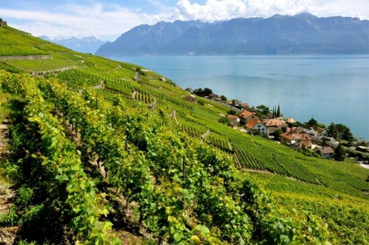 Top 10 Wine-Lavaux